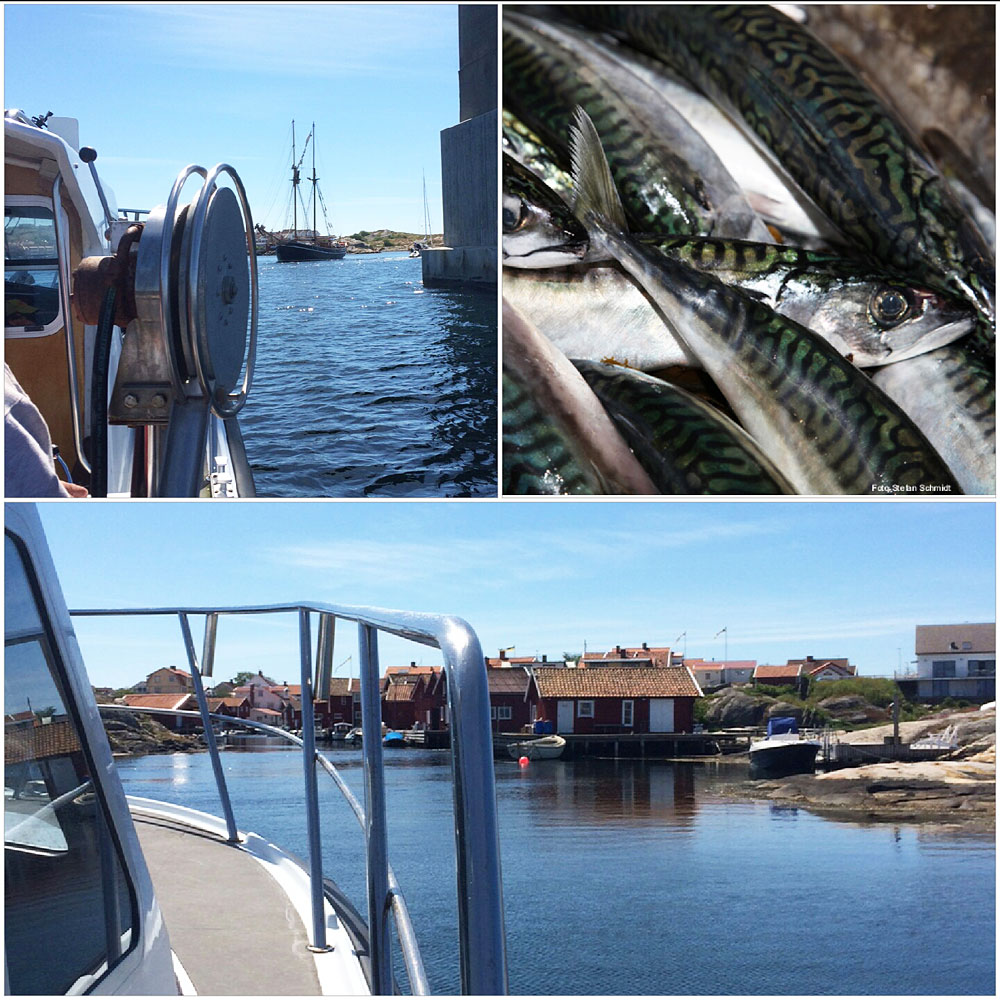 fisketur makrilll