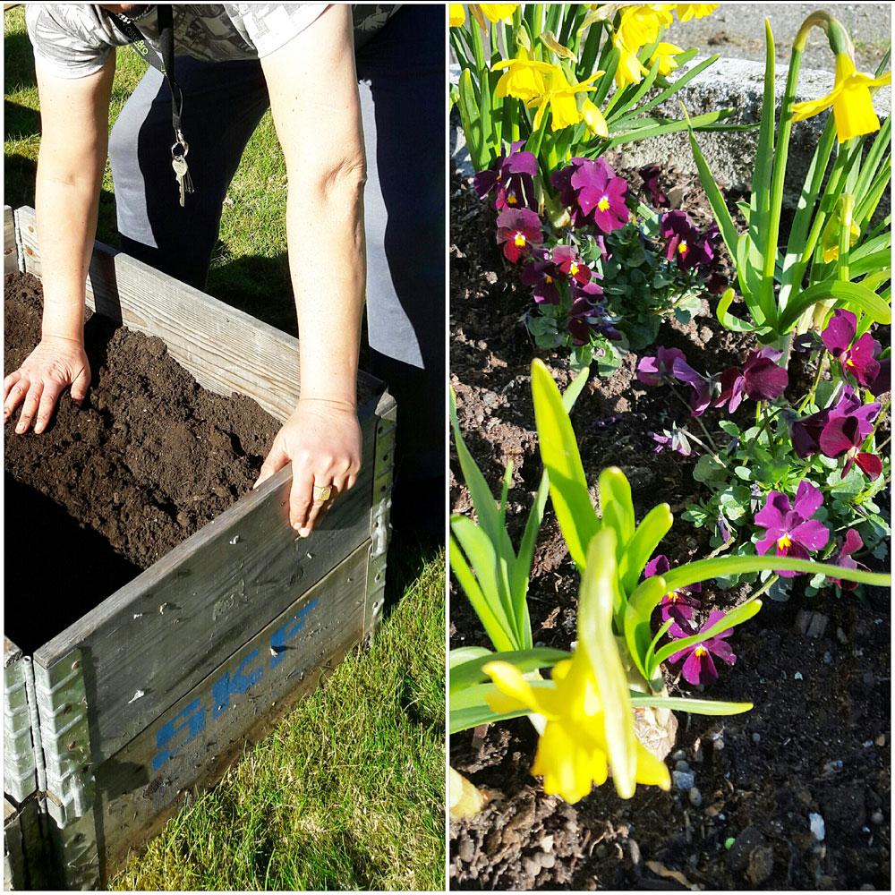 plantering_kollage